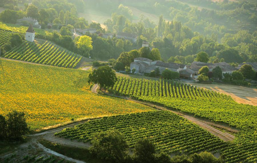 Wijngaard 4
